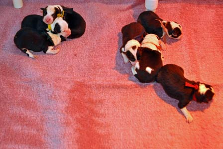 Pups one day old