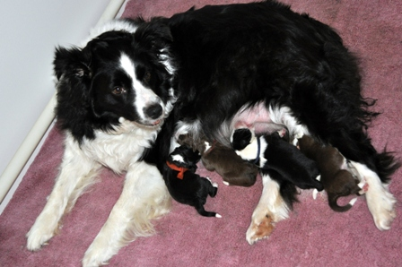 Teagn and her litter on the first morning