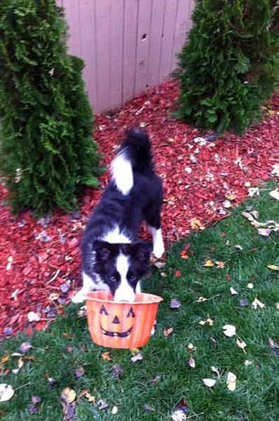 Jersey and the Jack o'Lantern